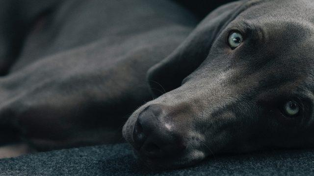 Was du von Hunden lernen kannst – oder achte auf deine Gedanken!