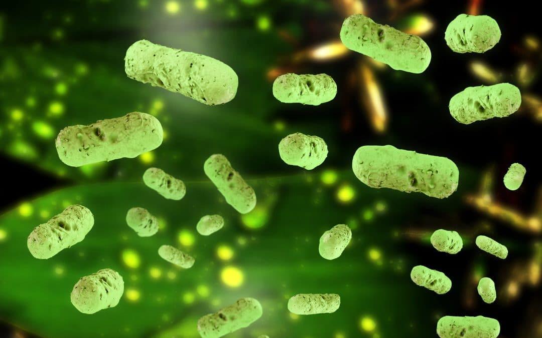 Die wunderbare Welt in Dir – dein Mikrobiom